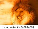 Lion King Of Beasts. Fiery...