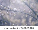 Pastel Colored Photo Of Tree...