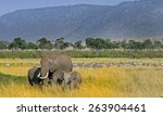 Landscape View Of A Herd Of...