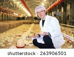 veterinarian works in chicken... | Shutterstock . vector #263906501