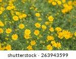 Macro Small Yellow Flower In...