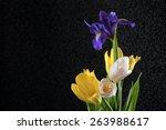 Close Up Of Beautiful Tulips...