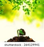 new life born plant | Shutterstock . vector #264129941