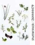 fresh herbs | Shutterstock . vector #264444479