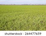 plants   Shutterstock . vector #264477659