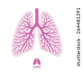 human lungs illustration in... | Shutterstock .eps vector #264481391
