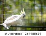 Beautiful White  Parrot In A...