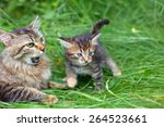 Mom Cat With Her Little Kitten...