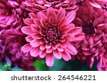 abstract of flower dahlia for... | Shutterstock . vector #264546221