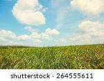 Grassy Field On A Sunny Summer...