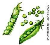 green peas watercolor | Shutterstock .eps vector #264646427
