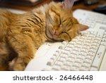 Stock photo cat sleep on a keyboard 26466448