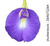 Isolated Purple Flower With...