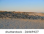 Flock Of Seabirds Swarming Ove...