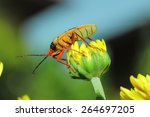 Insect  Moth  Bug  Beetle Kapo...