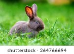 Little Rabbit On Green Grass In ...