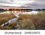 A Natural Oyster Bed As Seen A...