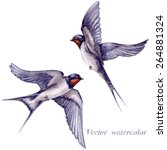 Stock vector watercolor two flying swallows isolated on white background 264881324
