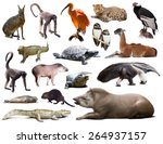 set of  tapir  mara and other... | Shutterstock . vector #264937157