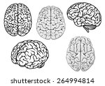 black and white human brains... | Shutterstock .eps vector #264994814