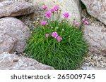 Alpine Mountain Home Garden...