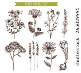 vector set of ink hand drawn... | Shutterstock .eps vector #265029995