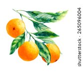 vector watercolor fruit orange... | Shutterstock .eps vector #265096004