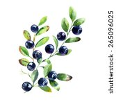 vector watercolor blueberry... | Shutterstock .eps vector #265096025
