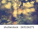 wildflowers in sunset | Shutterstock . vector #265126271