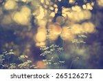 wildflowers in sunset | Shutterstock . vector #265126271