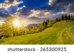 path through the field with green grass in mountains near coniferous forest in sunset light - stock photo