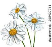 daisy vector illustration  hand ... | Shutterstock .eps vector #265437761