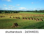 Amish Hay Field In Western New...