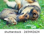 dog and cat best friends... | Shutterstock . vector #265442624
