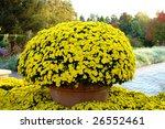 mum flower   Shutterstock . vector #26552461