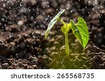 green seedling growing on the... | Shutterstock . vector #265568735