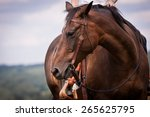 Small photo of western ride style, horse with rider, blue background, horse listen to the rider, horse riding