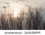 Bare Tree Branches At Dawn Sun