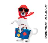 Jack Russell Dog Diva Lady Wit...