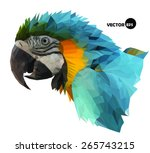 Colorful Macaw Parrot S Head...