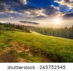 Summer Landscape. Fog From...