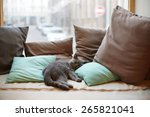 Stock photo cat resting on pillows 265821041