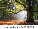 mighty oak tree wrapped in... | Shutterstock . vector #265958351