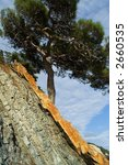 pine near the black sea ... | Shutterstock . vector #2660535