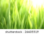 Bright Green Grass
