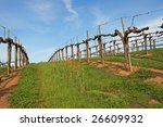 Spring time in the California Vineyards - stock photo