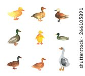 Set Of Watercolor Ducks....
