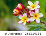 white   pink and yellow... | Shutterstock . vector #266214191