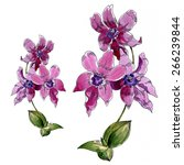 red watercolor orchid on a...   Shutterstock . vector #266239844
