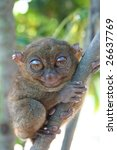 Small photo of Tarsier - Smallest Primate